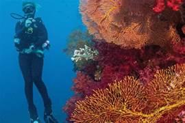 斐濟版海底大冒險,等你來挑戰!