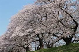 春暖「櫻」開,請收下這份小美好~