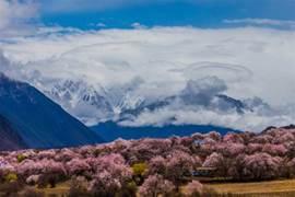 尋找一份「粉紅色的回憶」,聖地西藏桃花節帶你遇見真正的春天