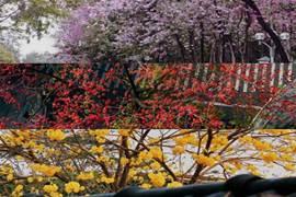 用50張驚豔美圖,留住廣州的春天!