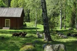 芬蘭的五大古堡怎麼玩才盡興?
