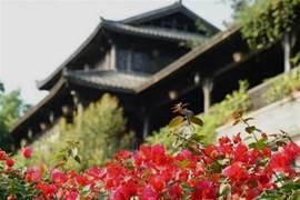 最近你去春遊了嗎?龍崗這個古鎮采青節太好好好好好玩了