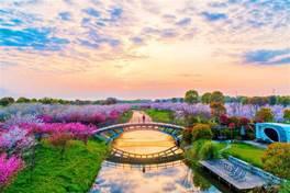 浙江最浪漫自駕天堂,坐擁250000㎡櫻花林,春光無限美到出圈!